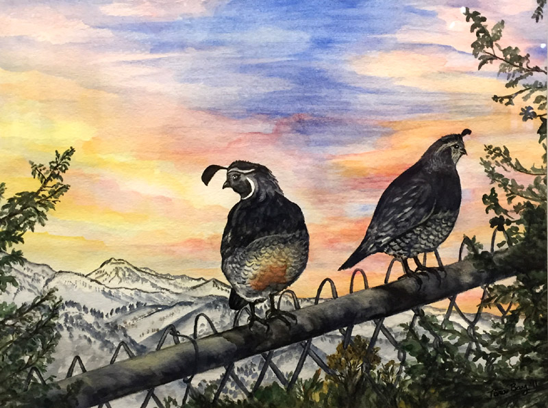Watermedia, Honorable Mention - Sunset Quail by Tara Bay